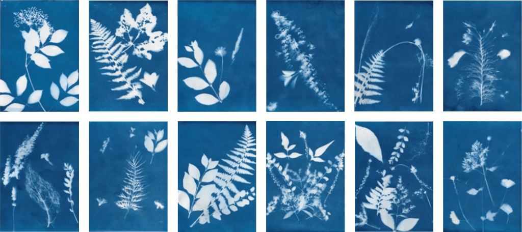 cyanotype papers