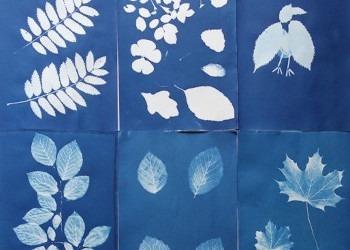 Cyanotype Sun prints